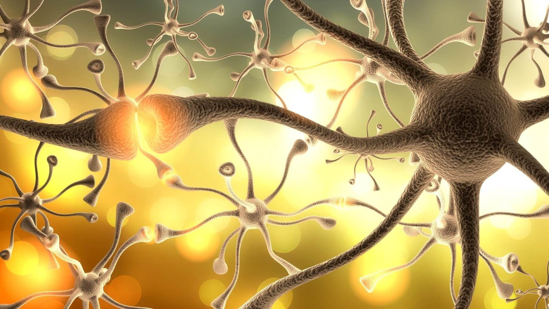 Nutzen wir wirklich nur 10% unseres Gehirns?