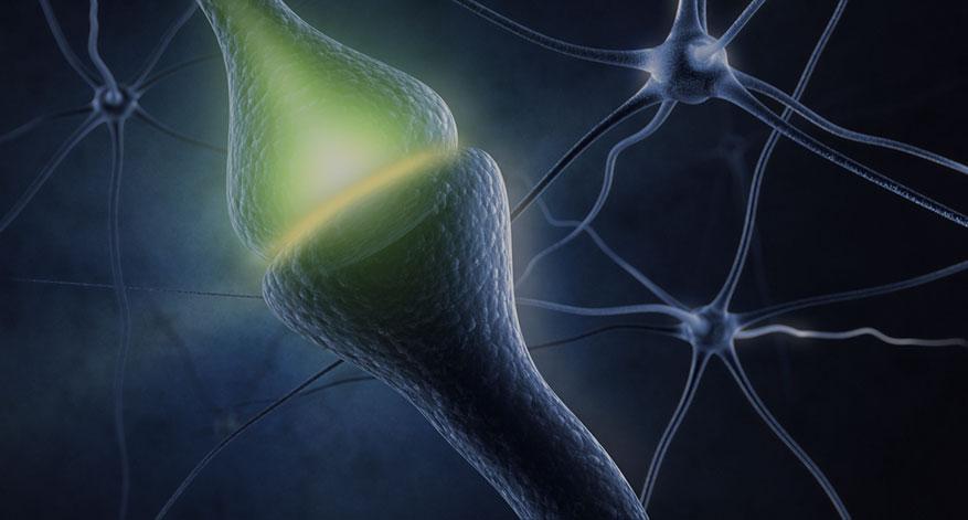 Neurotransmitter – Die wichtigsten Botenstoffe im Überblick