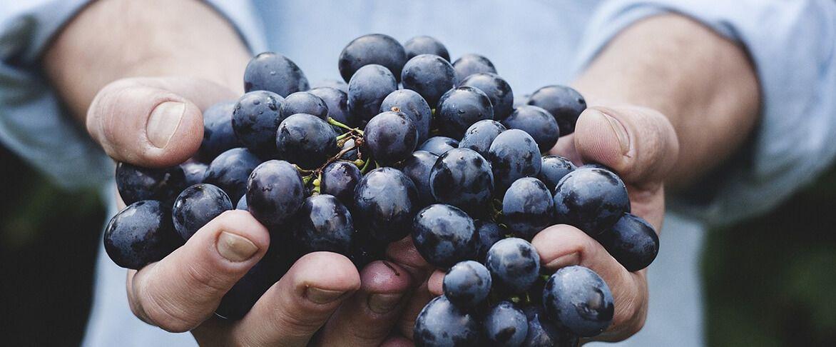 Antioxidantien kaufen - Schütze deine Zellen!