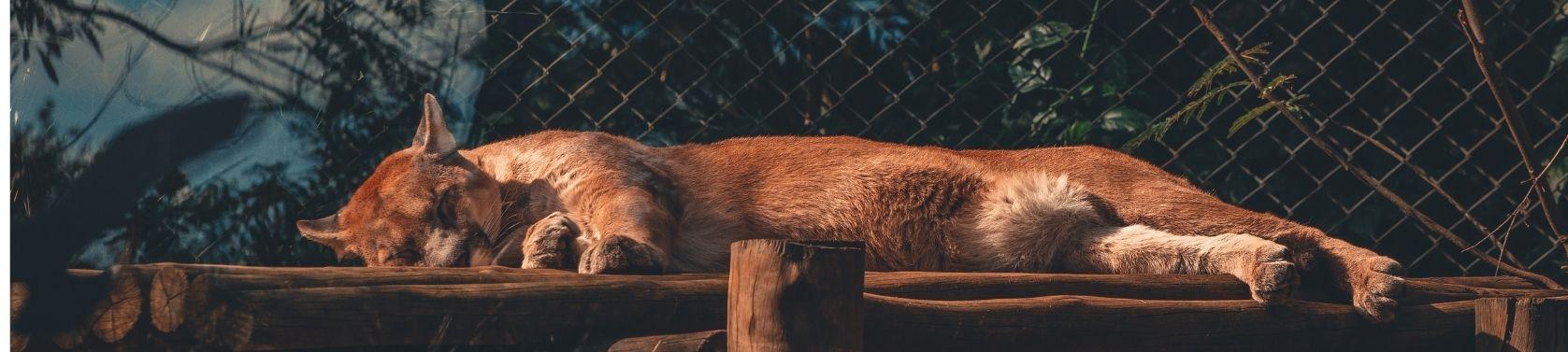 GABA − der Neurotransmitter für besseren Schlaf