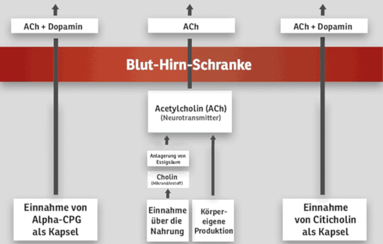 Cholin_Schaubild