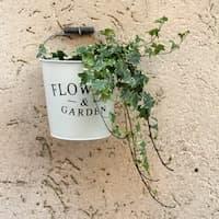 Bueropflanze-efeu