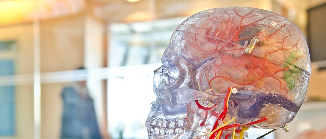 Stress blockiert das Gehirn