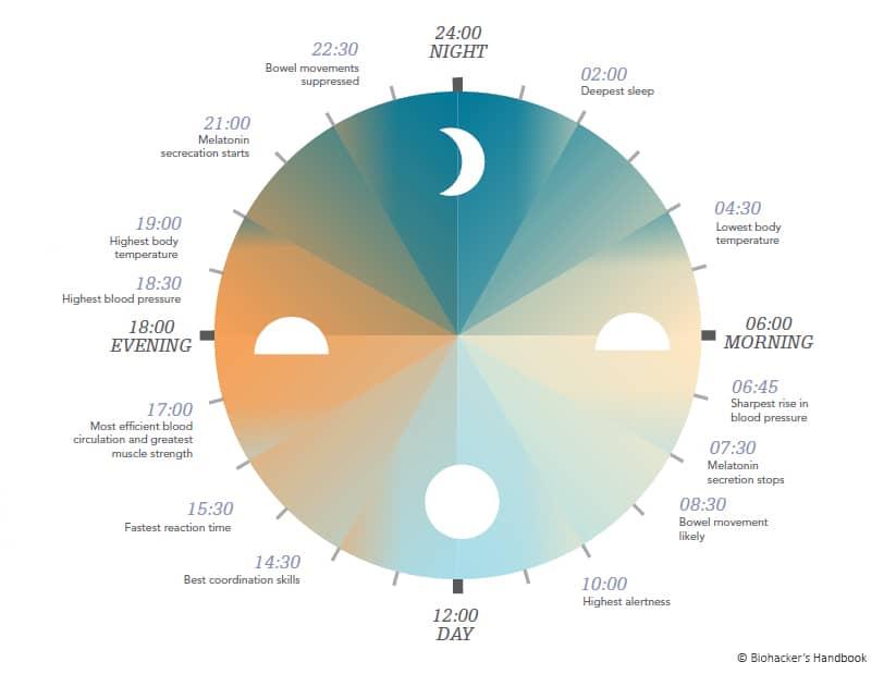 Das circadiane System